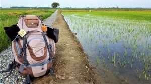 zaino appoggiato a terra tra le risaie